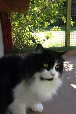 cat outside resized