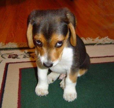 My dog eats poop how to stop it