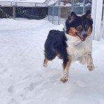 Brodie running