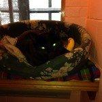 black cat xmas