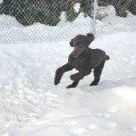 charlie at full speed
