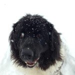 yoggi in snow