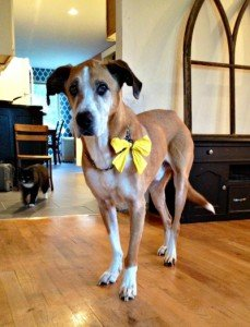 yellow-ribbon-dog-meaning