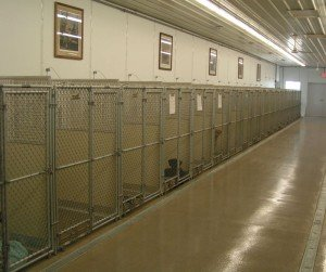 kennel interior with walls